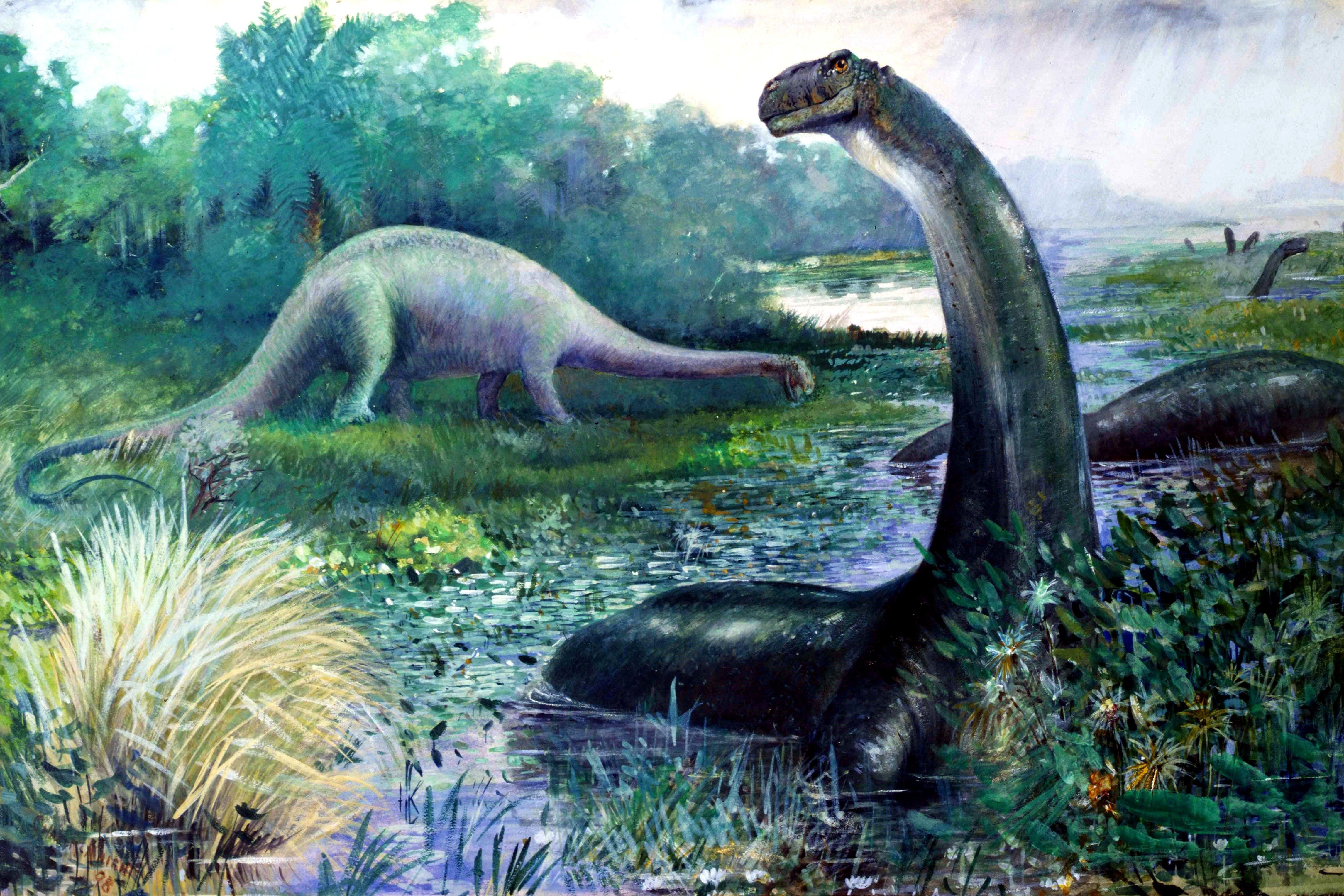 Una pintura obsoleta de 1897 de brontosaurio, ahora conocido como apatosaurio, que representa la forma de cabeza y el estilo de vida incorrectos