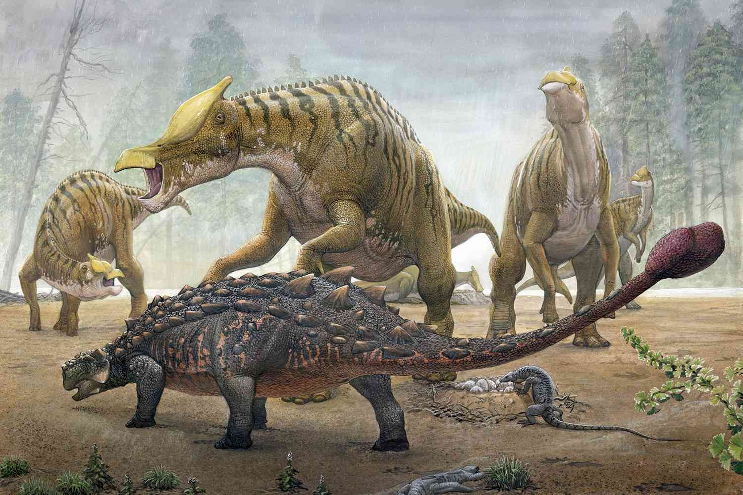 An illustration of a herd of Saurolophus with other, smaller dinosaurs