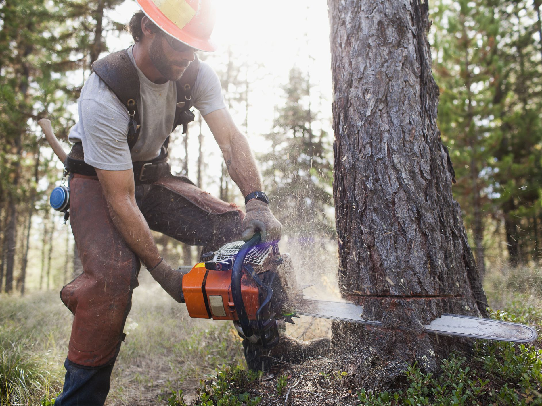 How to Fell a Tree Using a Chainsaw
