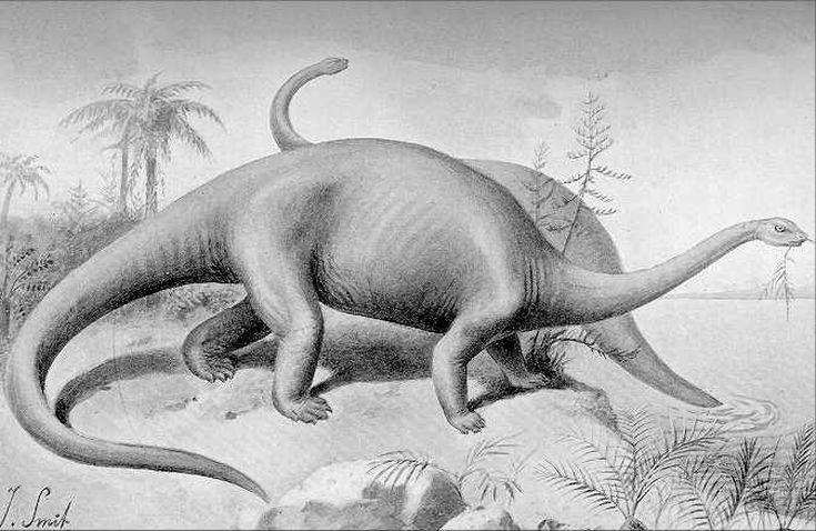 Is Mokele-Mbembe Really a Dinosaur?
