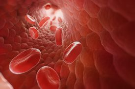 Red Blood Cells in Bloodstream