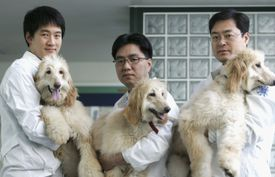 Lee Byeong-Chun (C) a veterinary professor of Seoul National University, and his researchers show three female genetically identical Afghan Hound clones