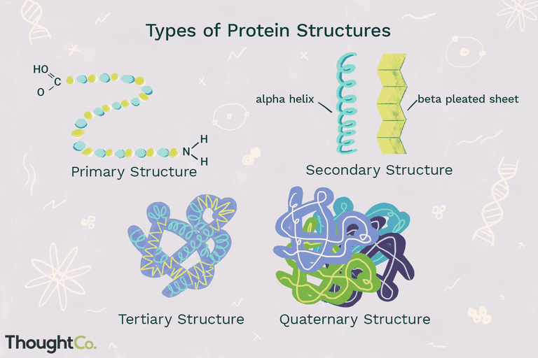The four types of protein structures