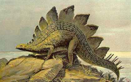 how was stegosaurus discovered