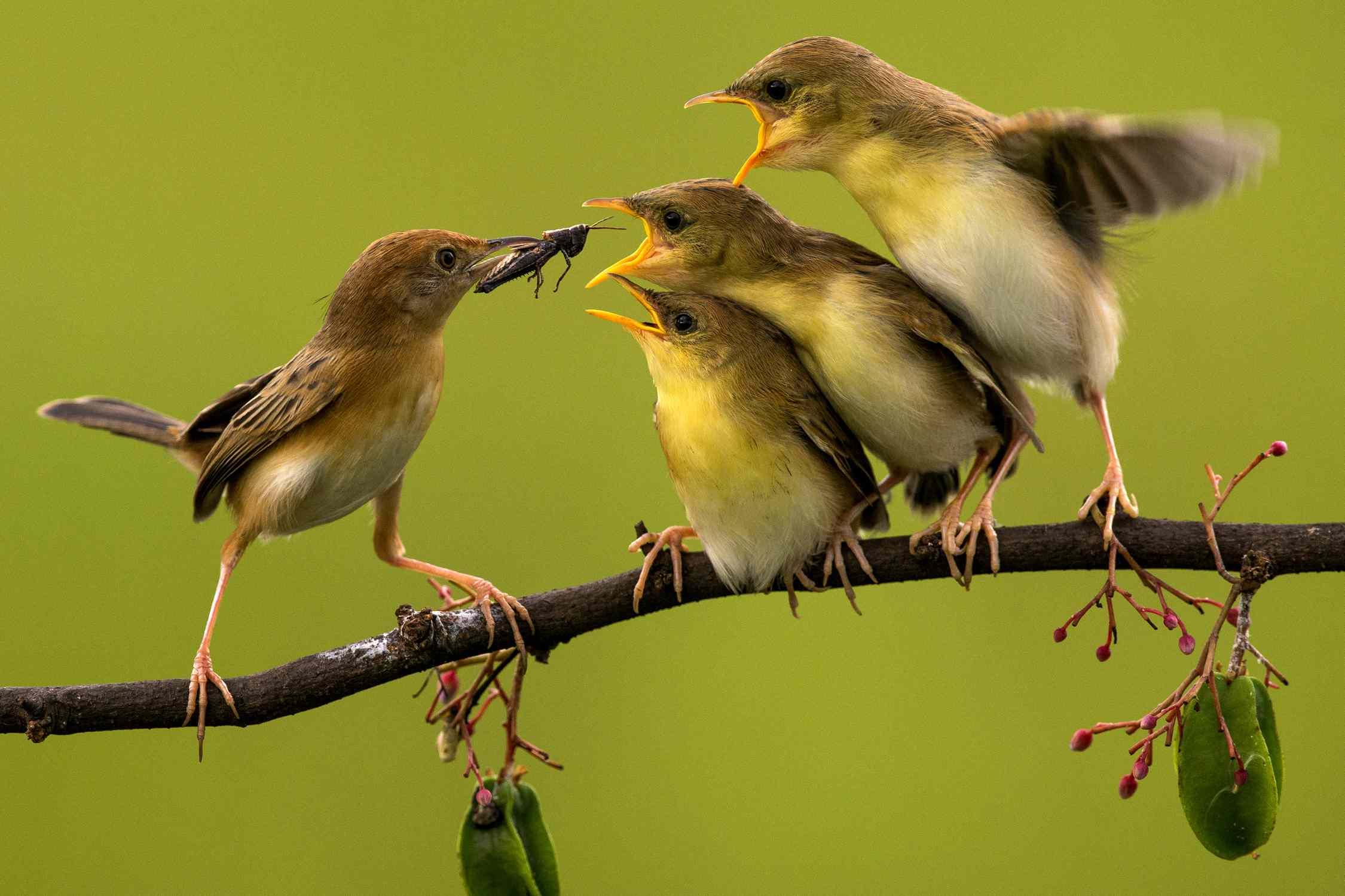 Es gibt vier grundlegende Mechanismen, durch die die biologische Evolution stattfindet.  Dazu gehören Mutation, Migration, genetische Drift und natürliche Selektion.