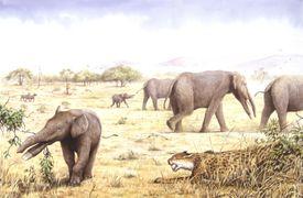 Illustration of herd of Amebelodons