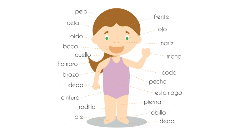 What Are the Names for Body Parts in Spanish?