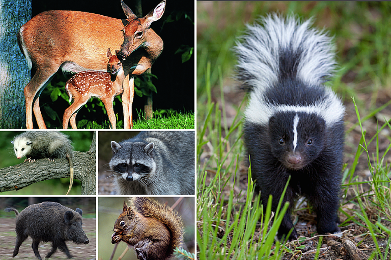 Photos of Woodland Animals