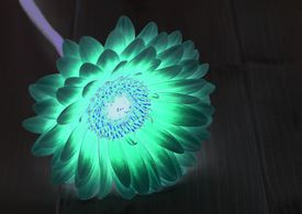 Tonic water, which contains quinine, can be used to impart a blue glow to a white flower.