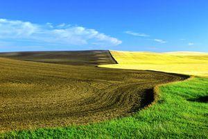 Fields Near Biggar, Saskatchewan