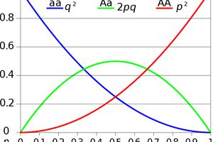 Hardy–Weinberg principle graph