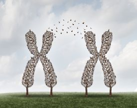 Two large X structures on a grass field with birds flying between to represent X chromosomes and genes moving from to the other.