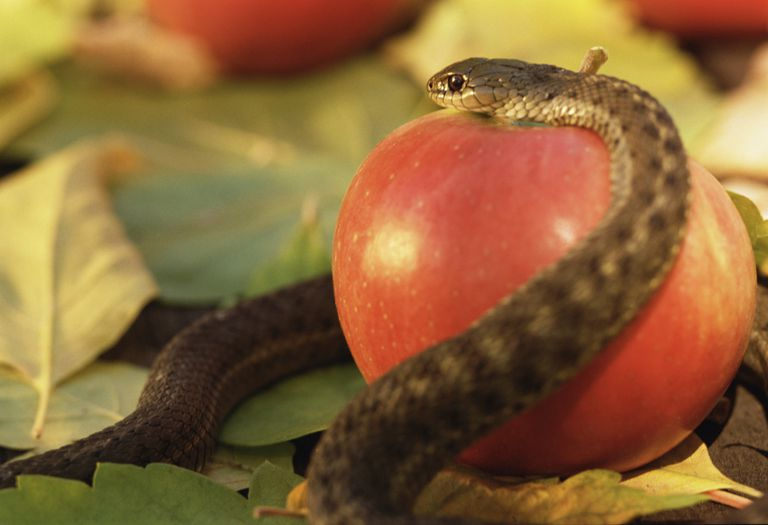 Snake and red apple on top of a pile of leaves.