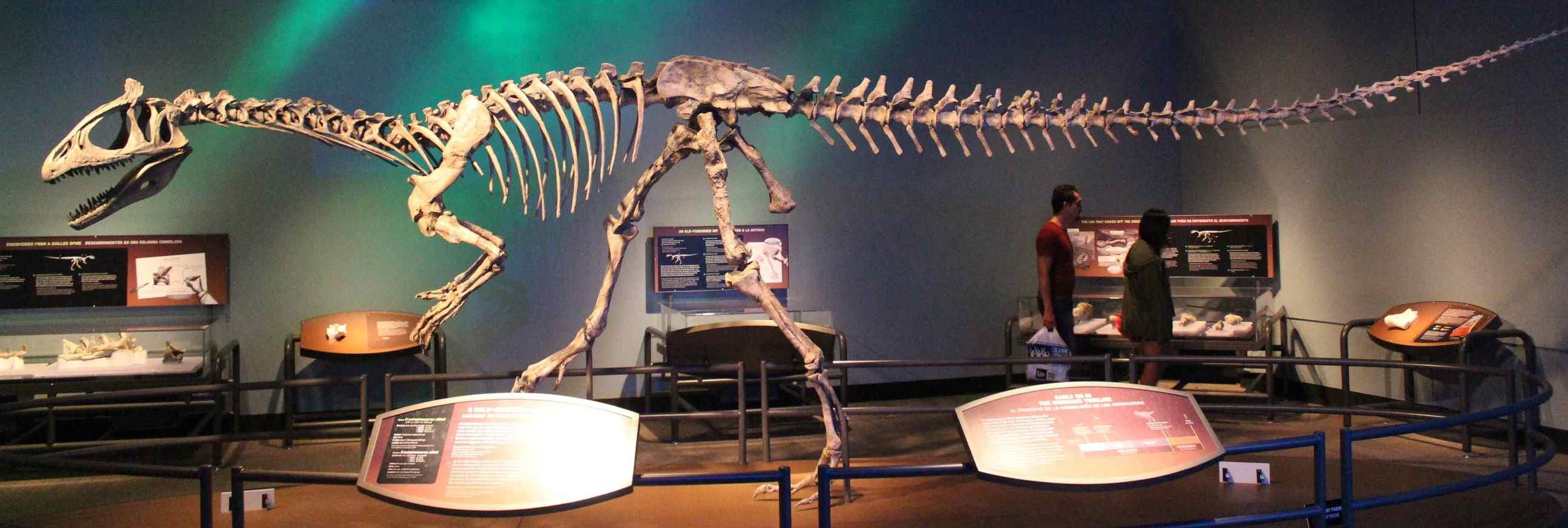 Cryolophosaurus fossil