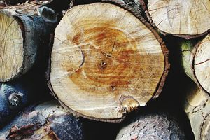 Fall Frame Shot of Logs