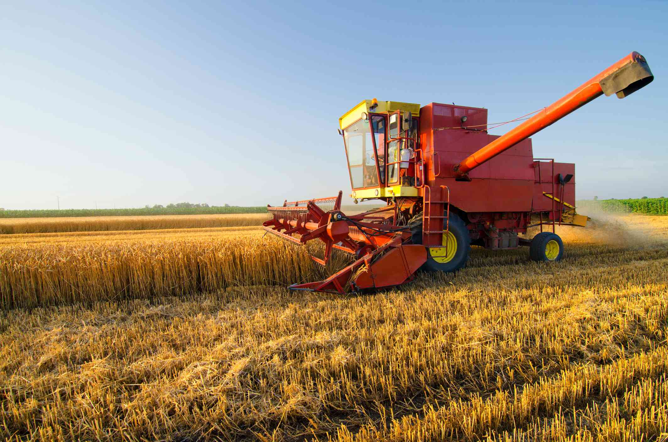 Harvester combine harvesting wheat on agricultural field