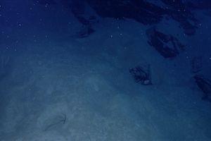 White specks of marine snow descend on sediment-covered rock in the Caribbean Sea.
