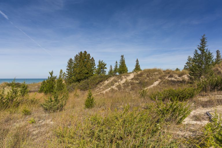 A sand dune ridge on the shore of Lake Huron