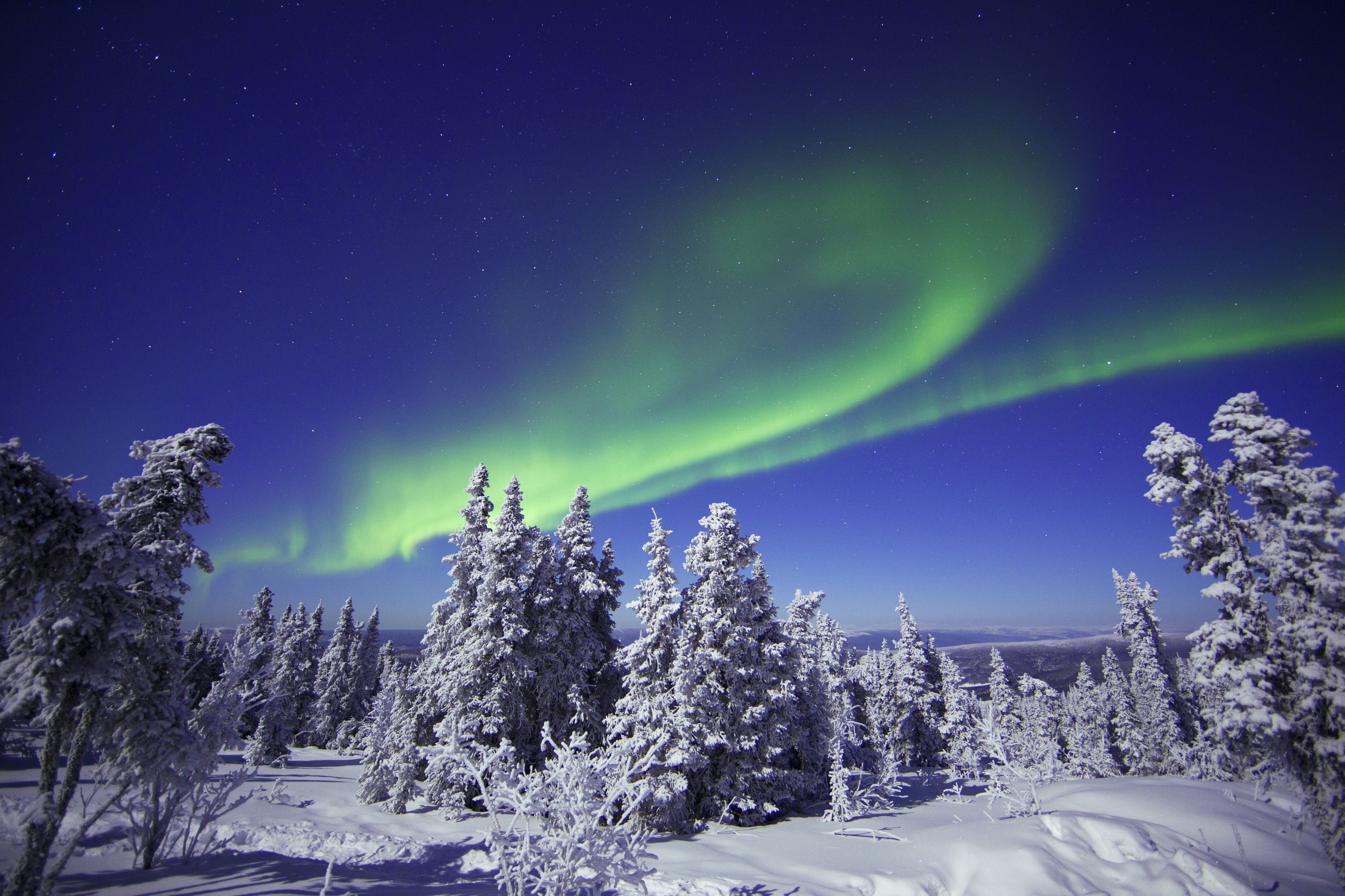 Northern Lights Over Snowy Trees