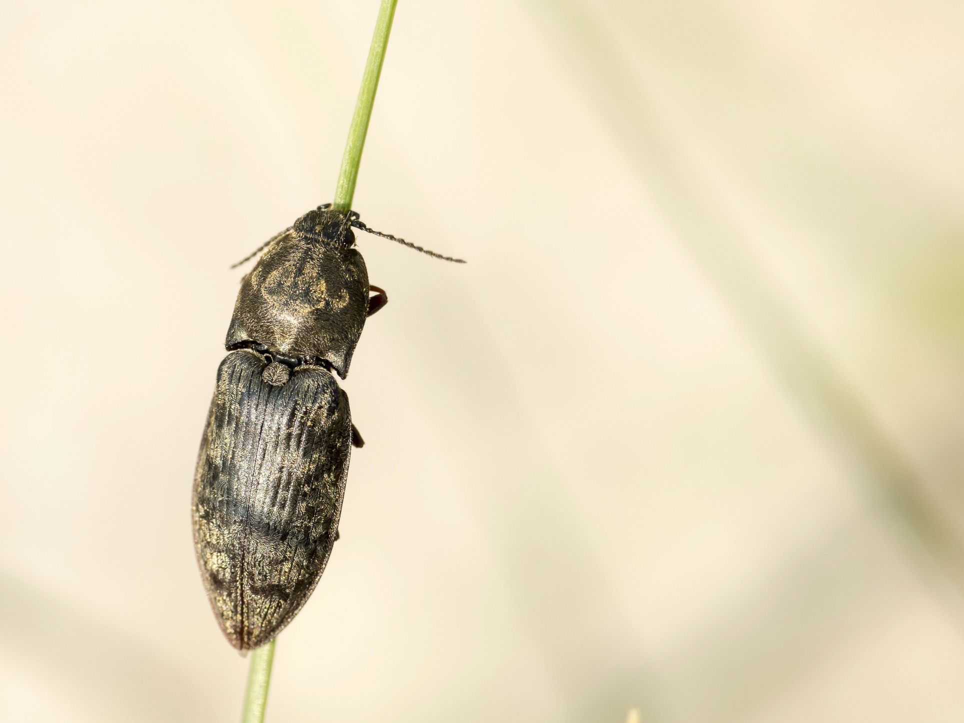 10 Fascinating Facts About Beetles