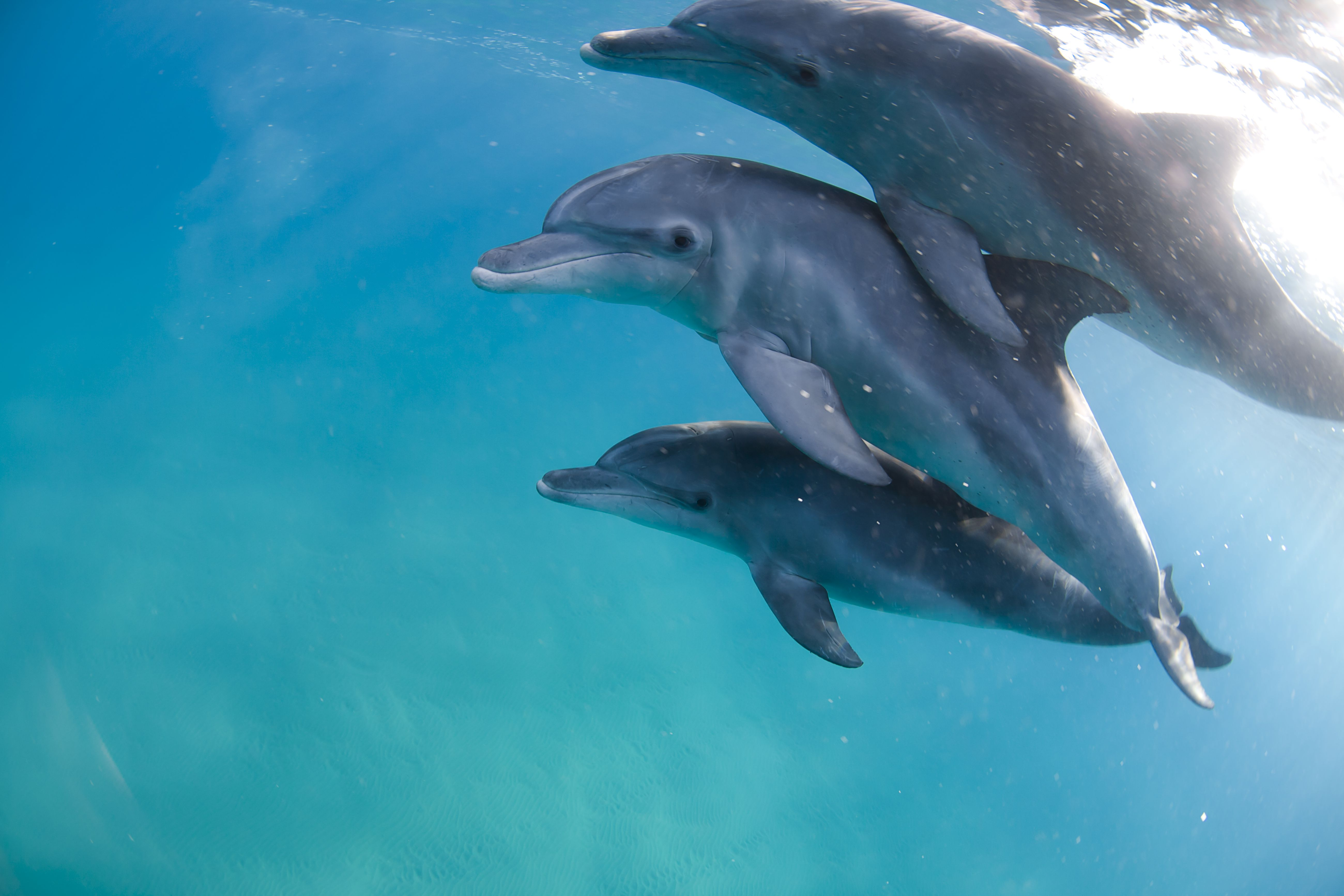 10 Facts About the Mammal Dolphins - photo#12