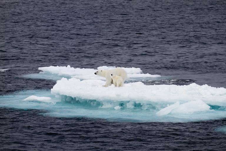 Female polar bear and cub on a small ice floe