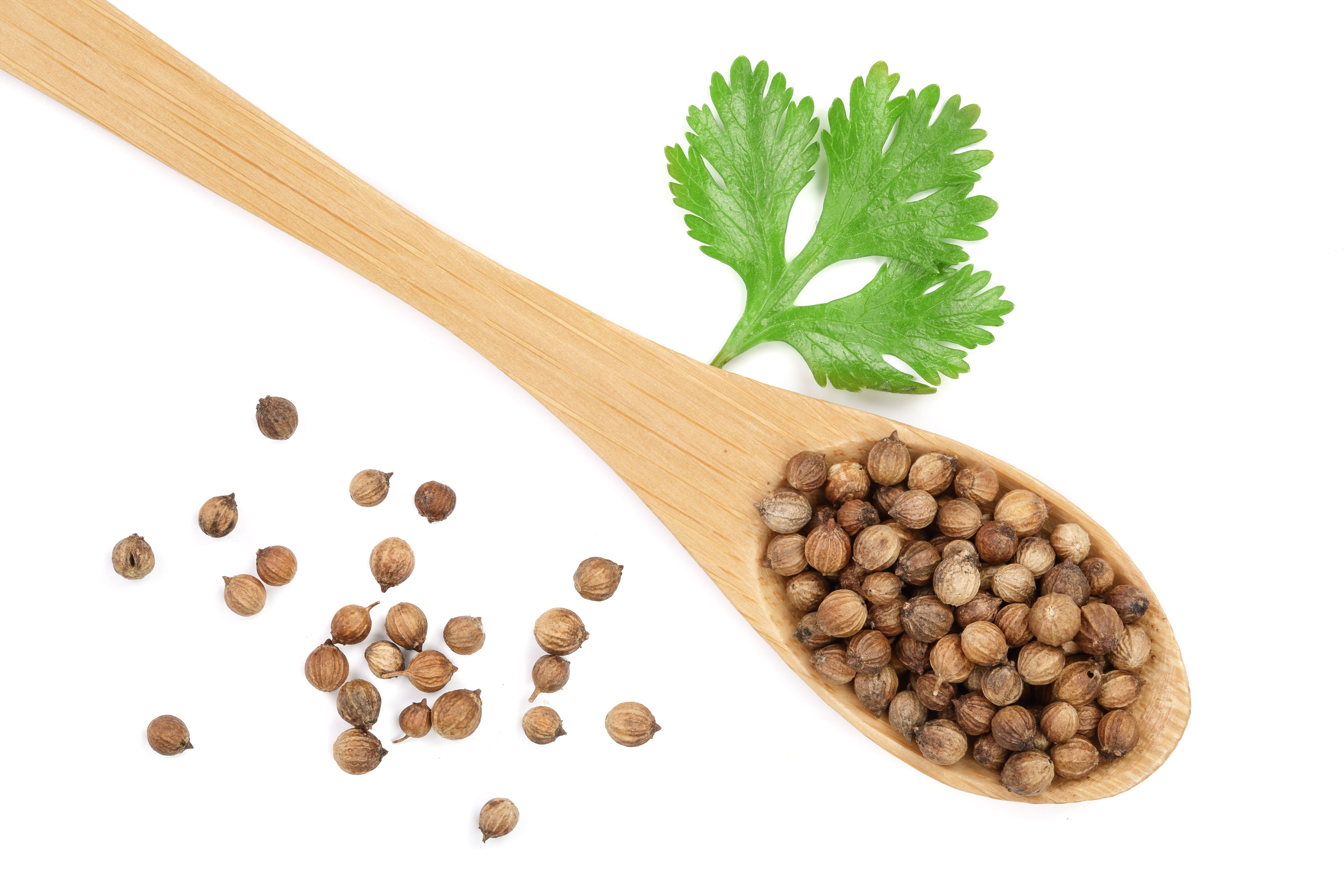 Cilantro is the leafy part of the coriander plant. The seeds are coriander spice.