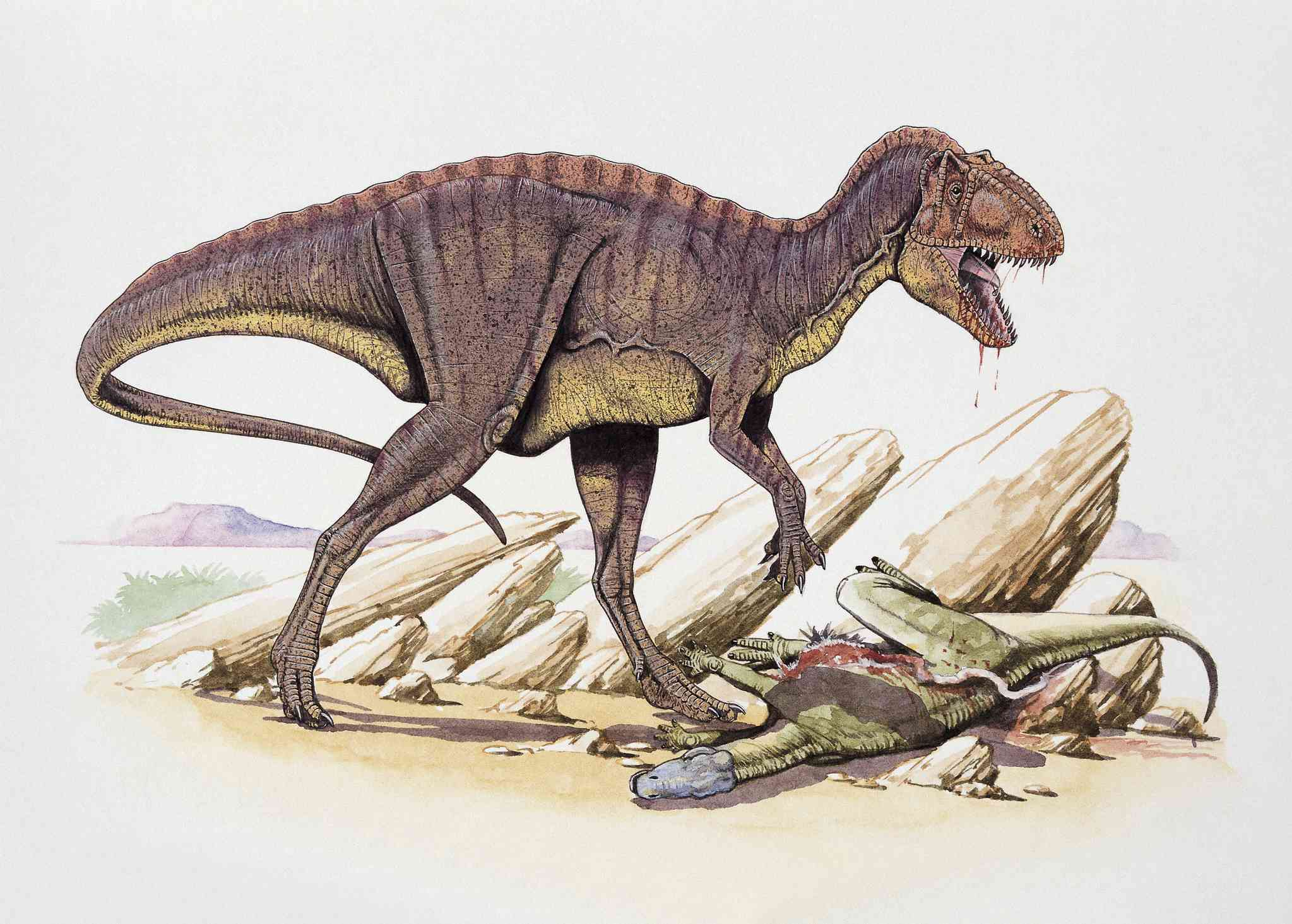 Pictures And Profiles Of 80 Carnivorous Dinosaurs