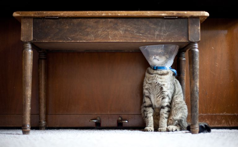Trapped Cat with a Medical Cone