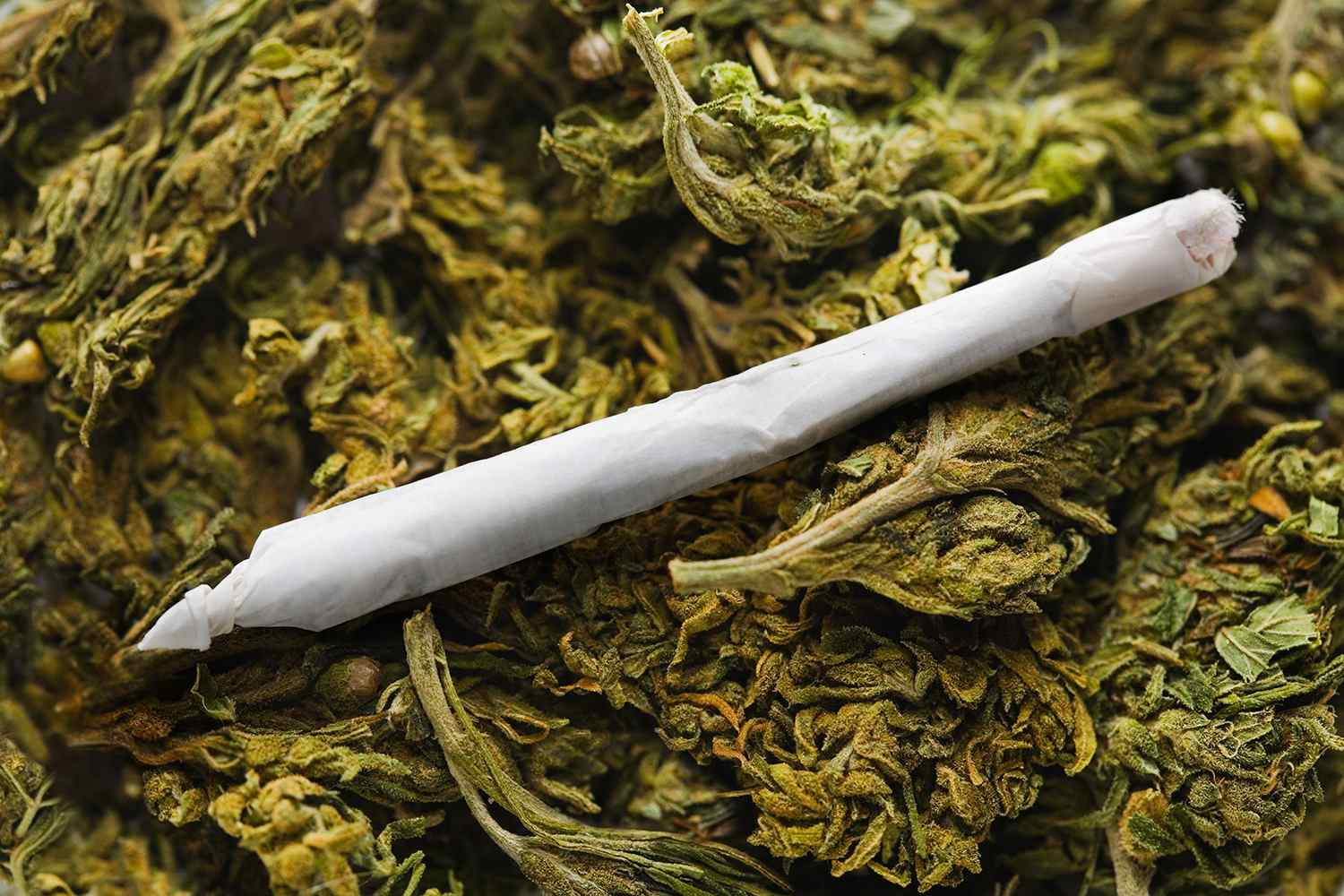 A marijuana cigarette or joint on a bed of buds