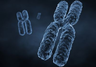 two functions of sex chromosomes for a woman in Norwalk