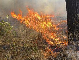 Running, Preheating Ground Wildfire