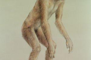 sivapithecus ramapithecus