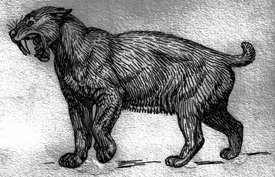 Saber-toothed tiger drawing