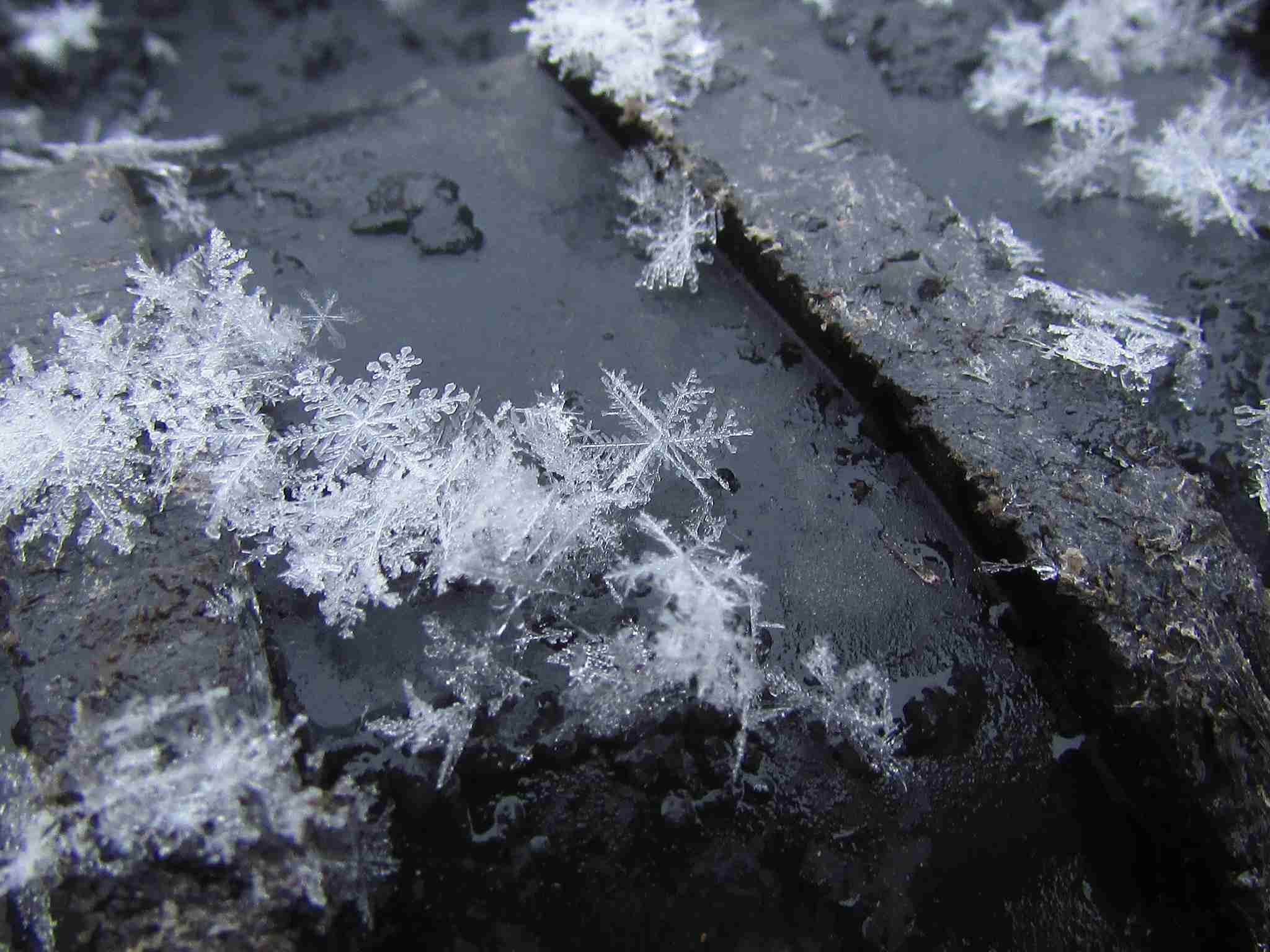 Closeup photo of snowflakes