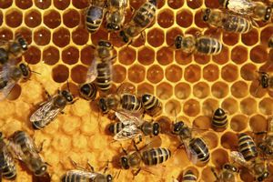 honey bees on hive from above