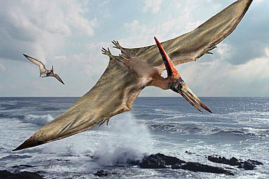 A Pteranodon in flight (Wikimedia Commons). 8b699d842