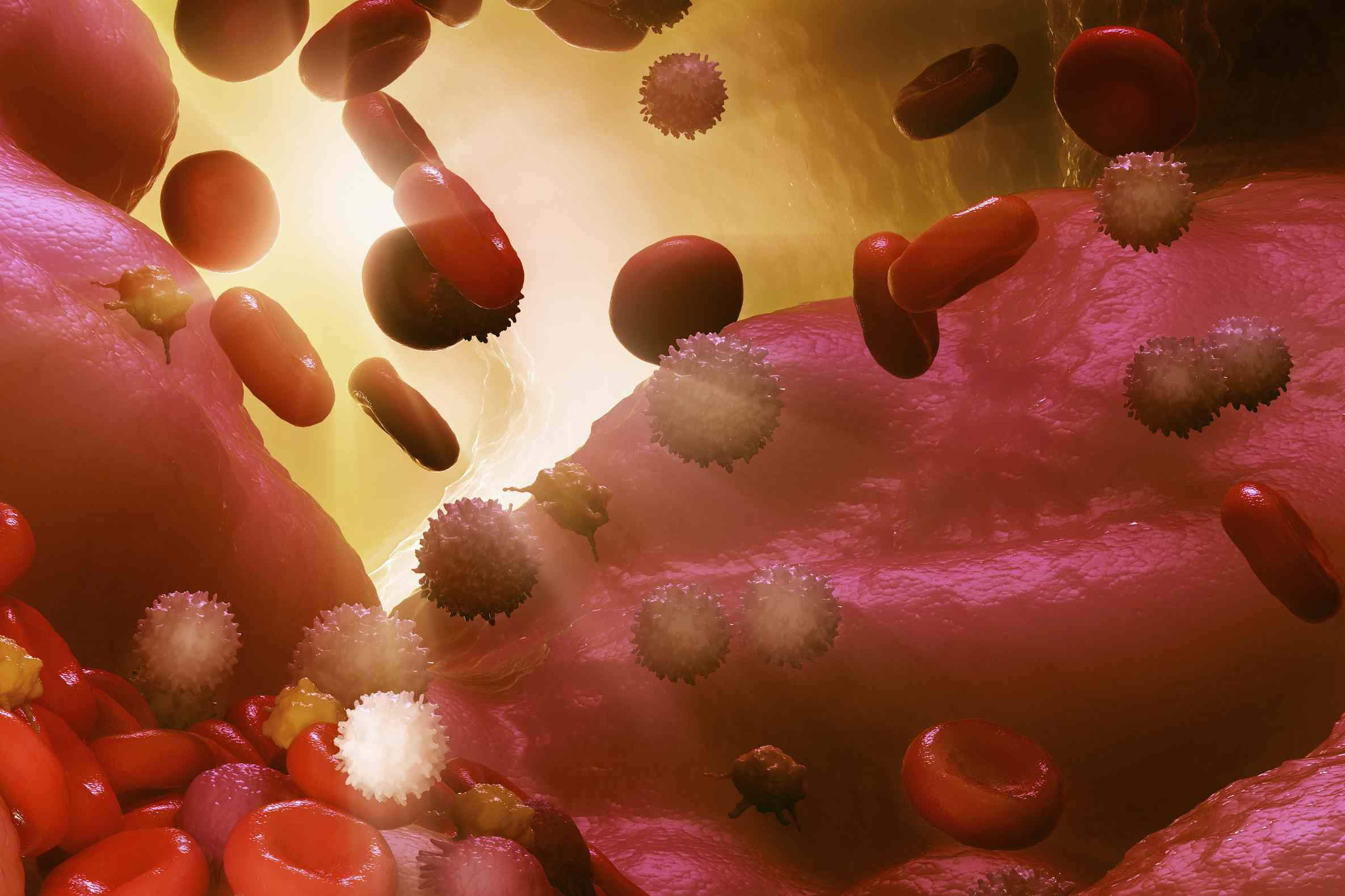 Graphic rendering of cells representing the immune system.