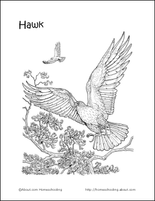 Bird Themed Word Search Vocabulary Crossword And More