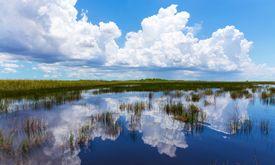Everglades natural landscape