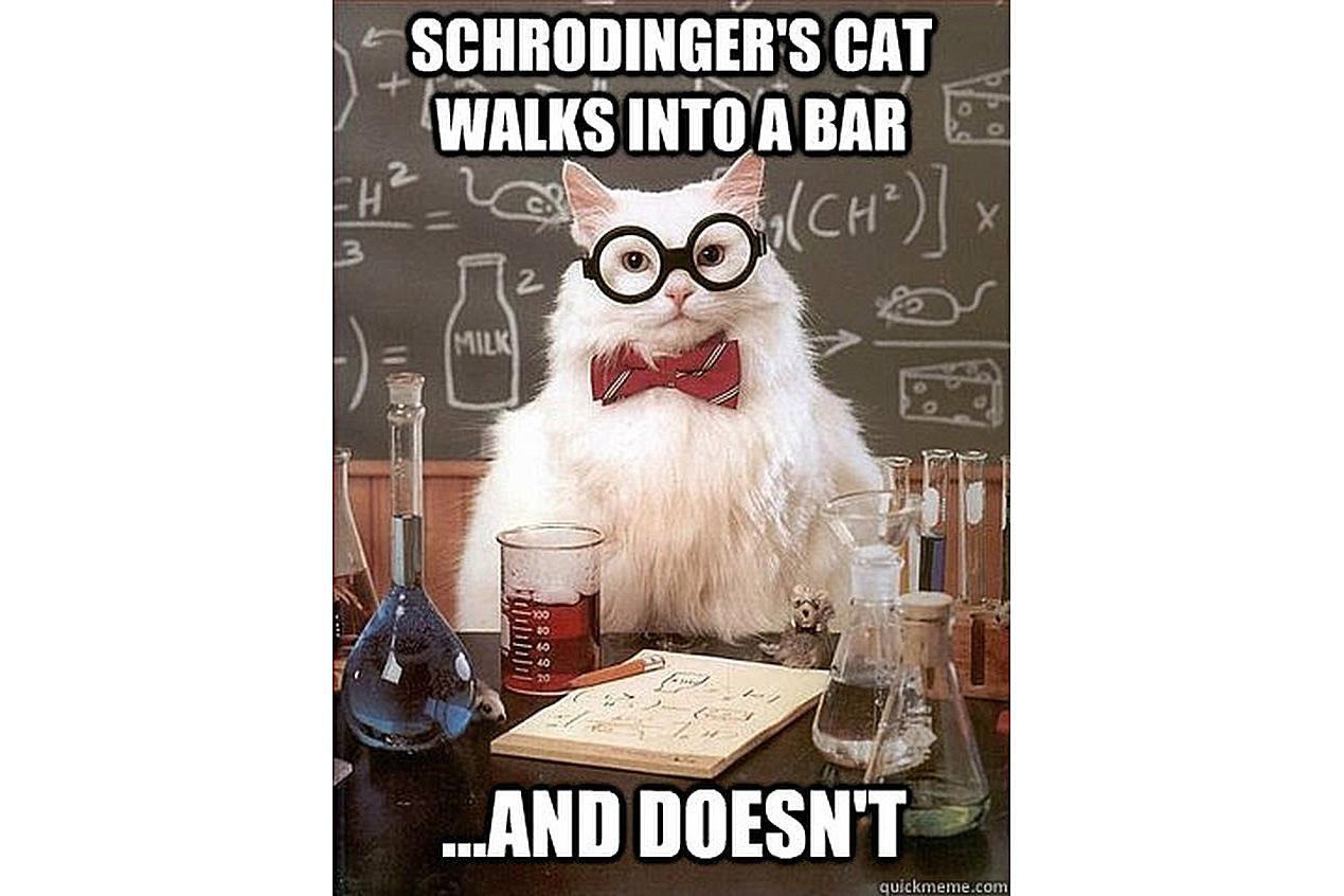 Chemistry Cat is not sure of Schrodinger's cat.