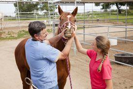 Veterinarian checking horse's teeth