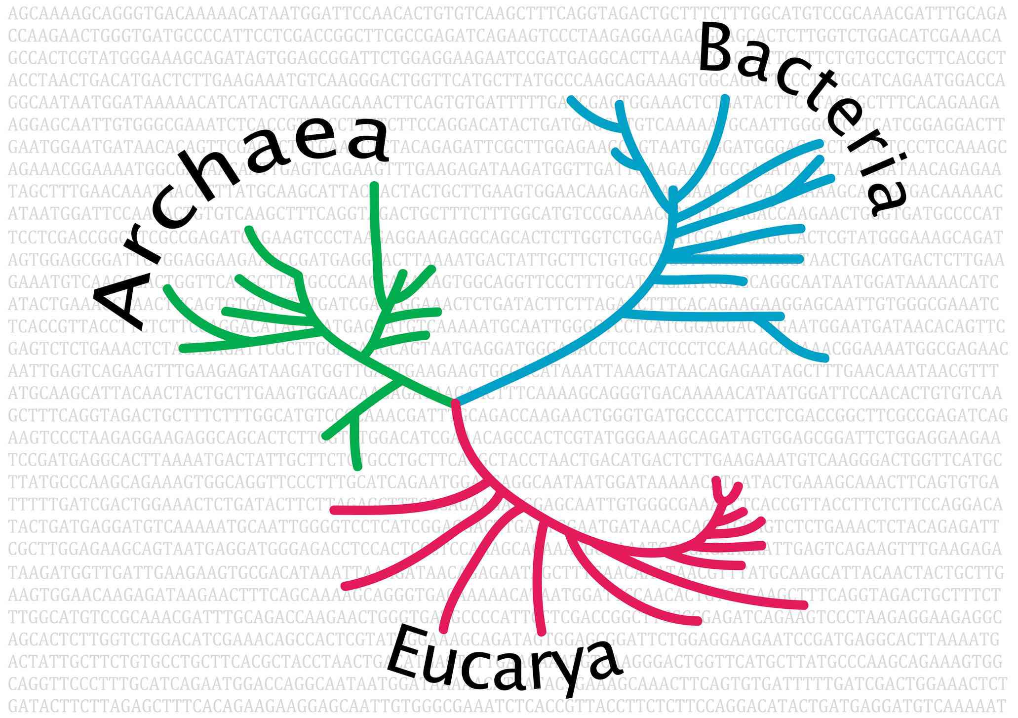 Unrooted phylogenetic tree of life.