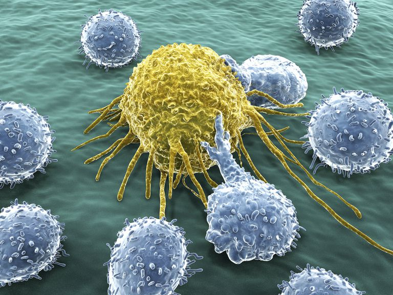 Lymphocytes recognize the antigens on foreign cells.