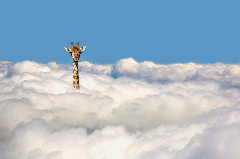 giraffe in the clouds