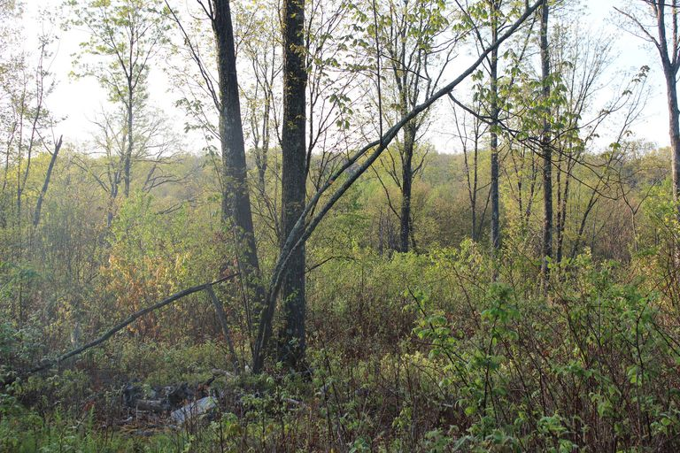 Early successional habitat in Pennsylvania