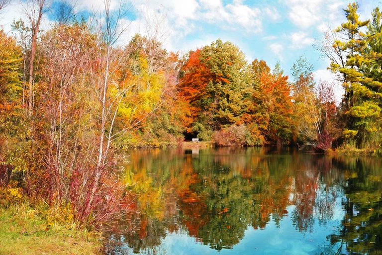 Trees with many different leaf colors grouped around a lake under a blue sky.