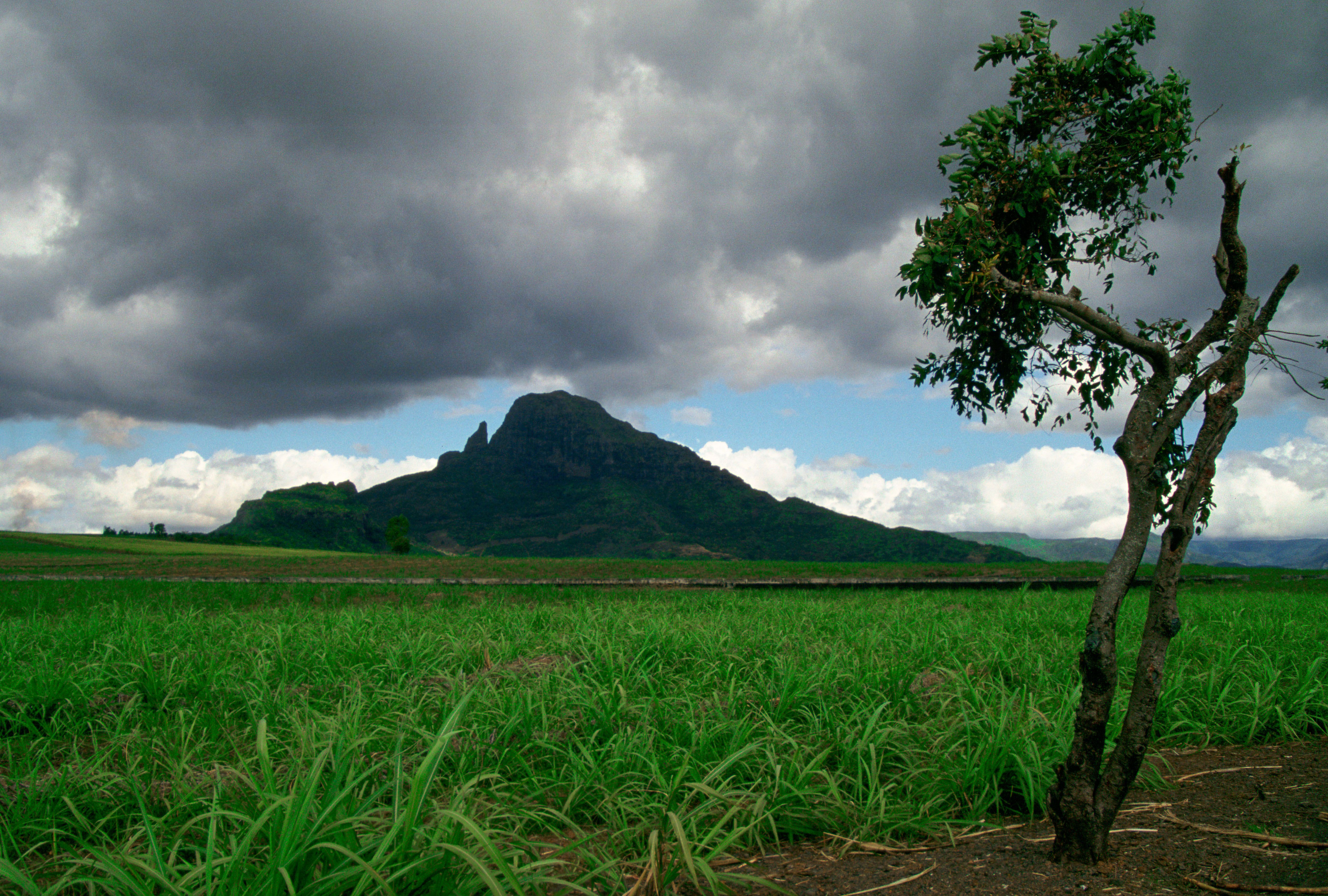 fields in front of mountain in Mauritius