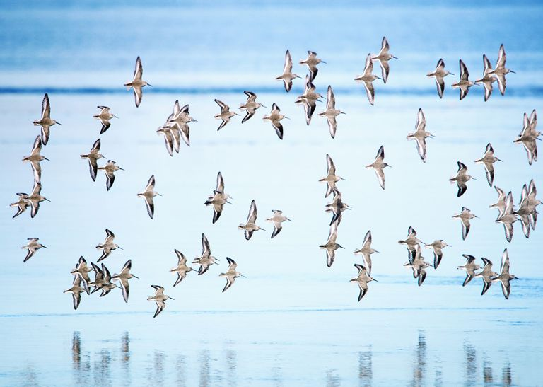 Spiritual Quotes About Birds