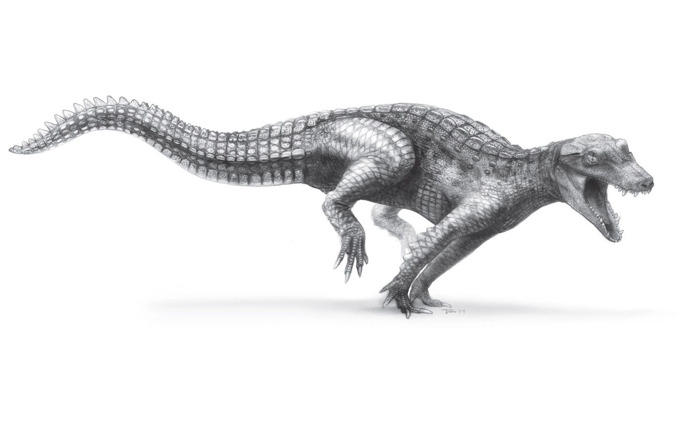 Pencil sketch of araripesuchus on a white background.